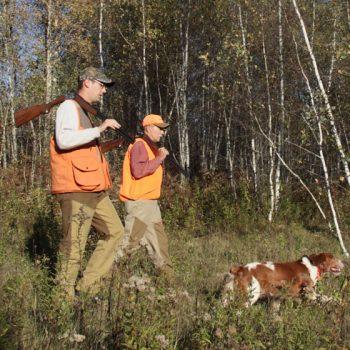 Chasse à la bécasse - Woodcock hunting